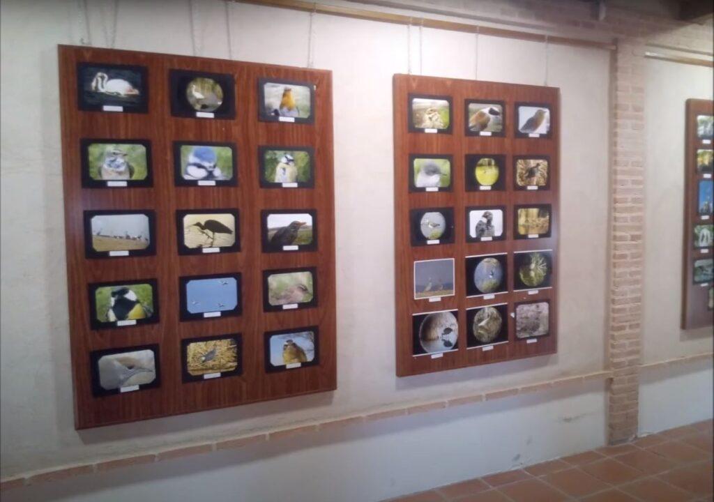 Exposición Naturaleza Villarrubia