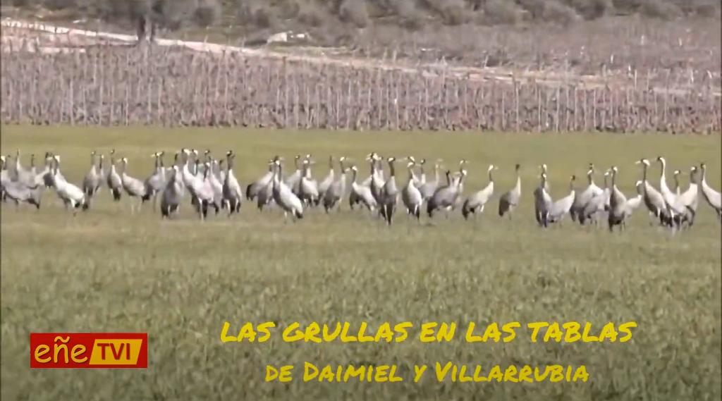 LAS GRULLAS EN LAS TABLAS DE DAIMIEL Y VILLARRUBIA con David