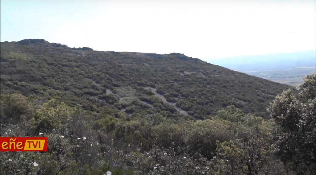 Buitres Leonados sobre la Sierra de Villarrubia
